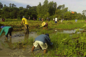 People-centered Nature-based Solutions for Sustainable Development